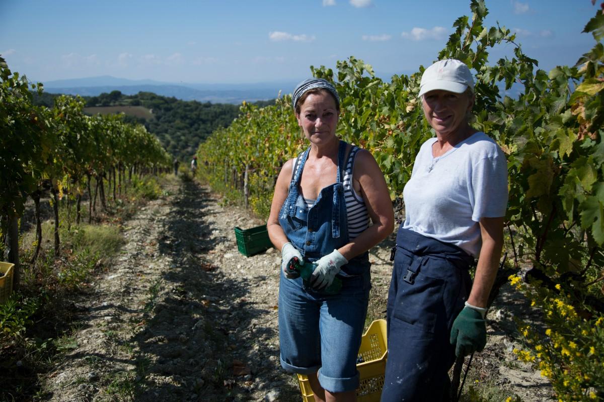Two women picking vegetables